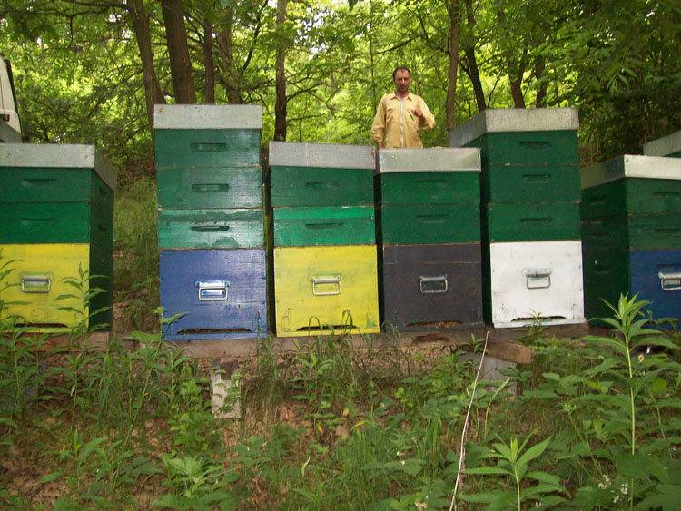 Ca da Laisna produzione miele del Roero