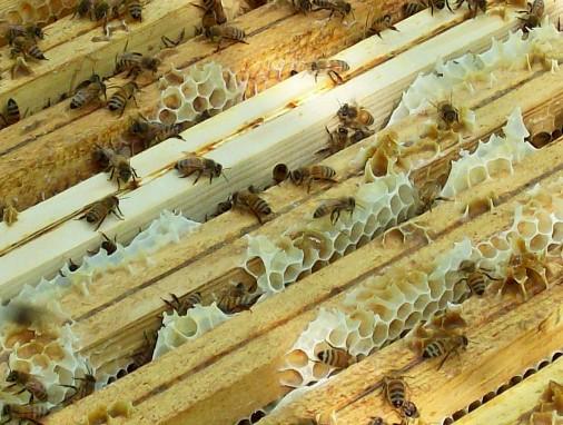 Telai di un'arnia con le api