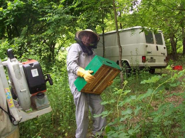 Asportazione del miele dall'apiario. Ca da Laisna